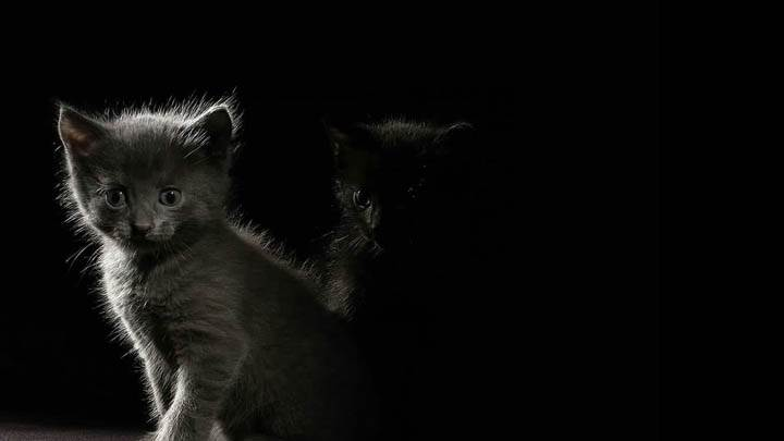 Cat In Dark Shadow
