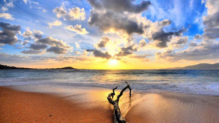 Sunset Beach Wallpaper With Tree Branch