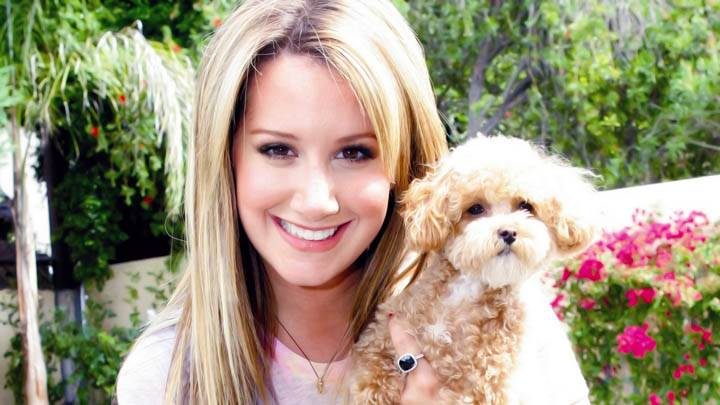 Ashley Tisdale Puppy In Hand Smile