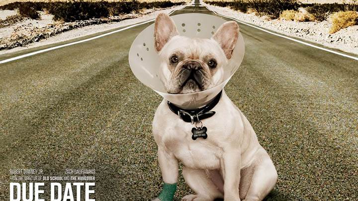 Due Date – Dog Sitting on Highway