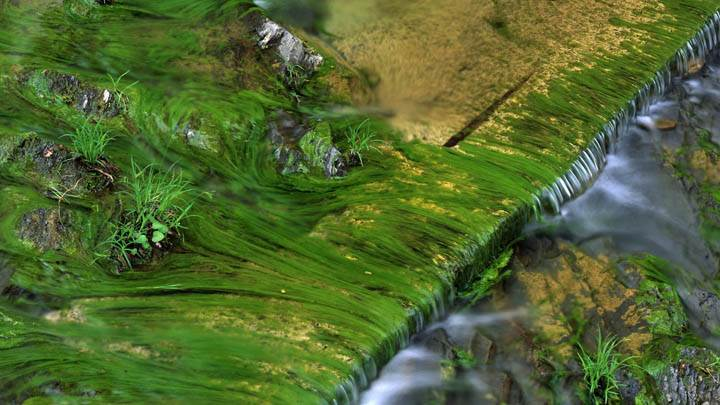 Algae Patterns in Harts Run, Greenbrier State Forest, West Virginia