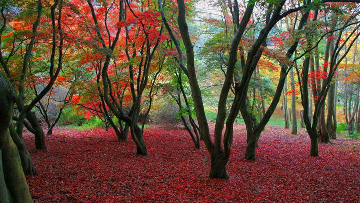 Autumn Colours, Winkworth Arboretum, United Kingdom