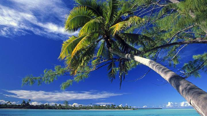 Bended Palm Tree on Marlon Brando's Private Atoll