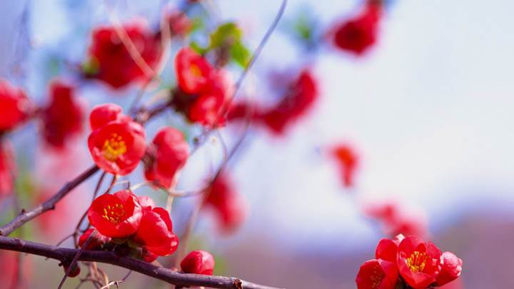 Bunches of Small Red Flowers