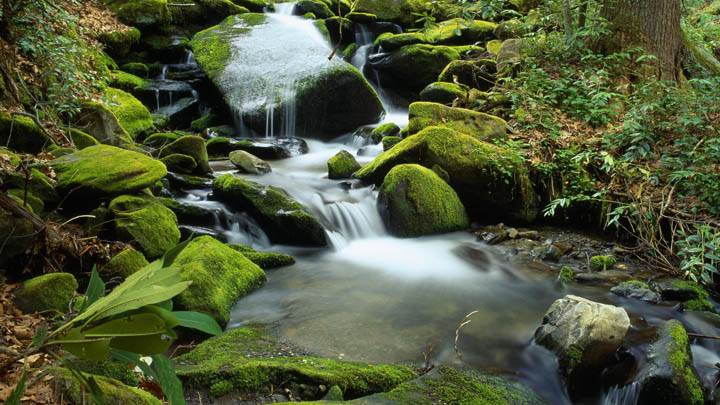 Cascade at Roaring Fork in April, Great Smoky Mountains National Park, Tennessee
