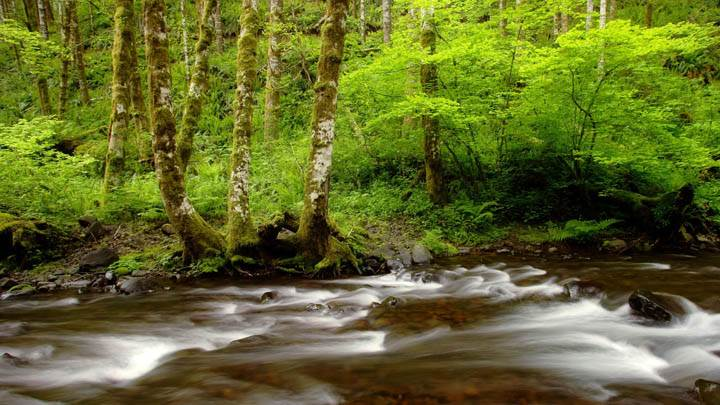 Gales Creek, Tillamook State Forest, Oregon