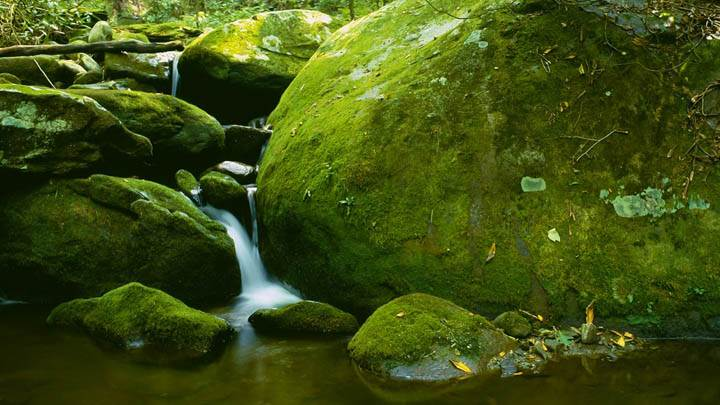 Mossy Boulder, Roaring Fork, Great Smoky Mountains National Park, Tennessee