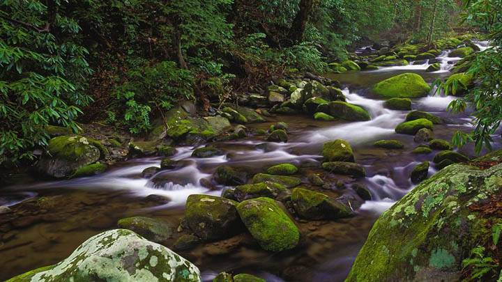 Mountain Stream, Great Smoky Mountains National Park, Tennessee