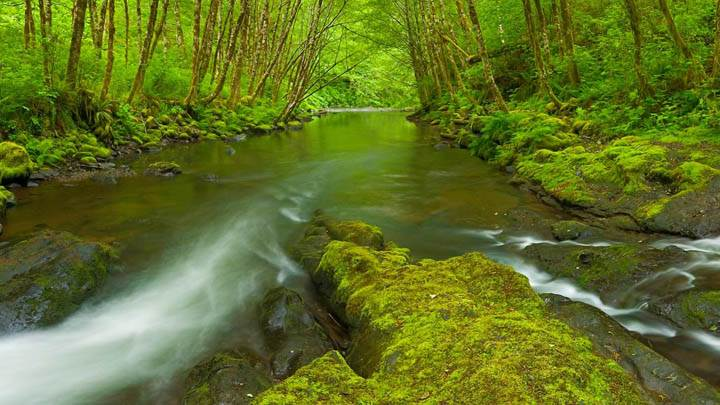 Nestucca River, Oregon