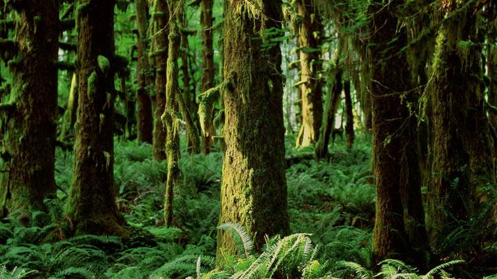 Quinault Rainforest, Washington