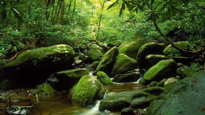 Roaring Fork in Summer, Great Smoky Mountains National Park, Tennessee
