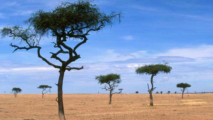Scattered Acacia Trees, Kenya, Africa