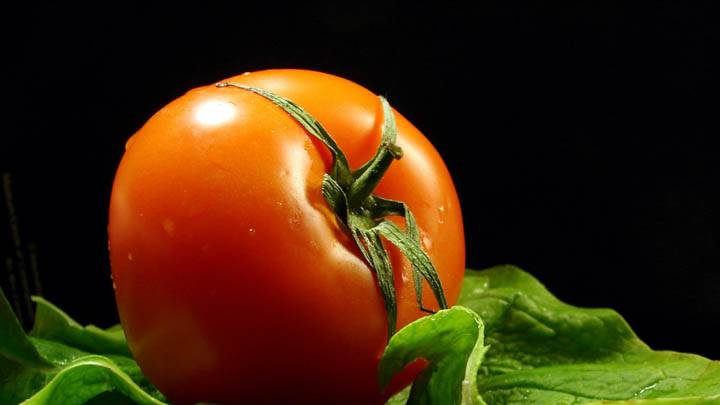 Tomato Closeup Picture