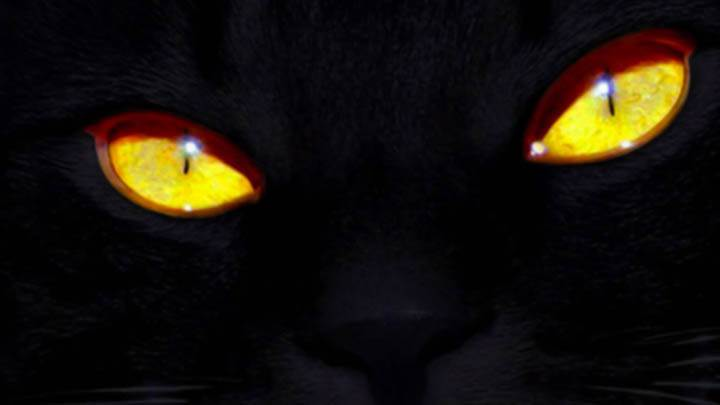 Black Cat Eyes Wallpaper