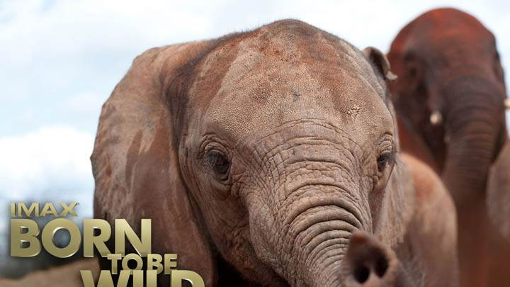 Born To Be Wild – Elephant Closeup