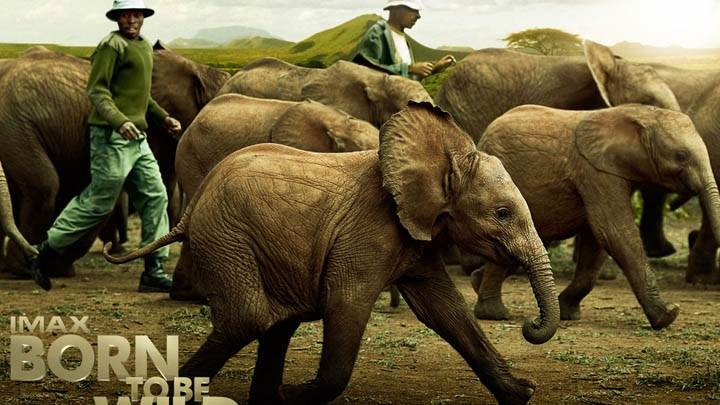Born To Be Wild – Elephants Running