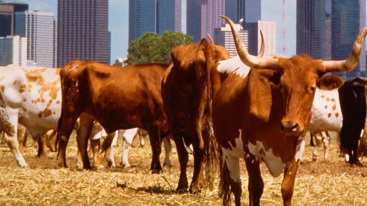 City Slickers, Dallas, Texas