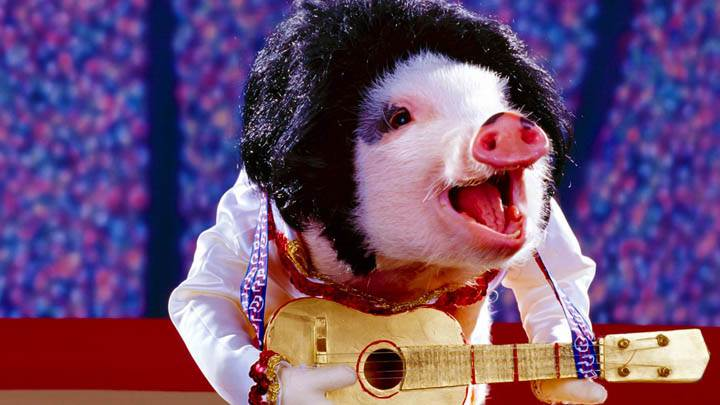 Elvis Pigsley