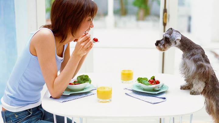 Little Dog Enjoying The Salad With Juice