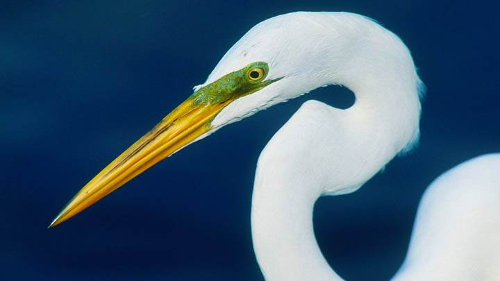 Perfect Form, Egret