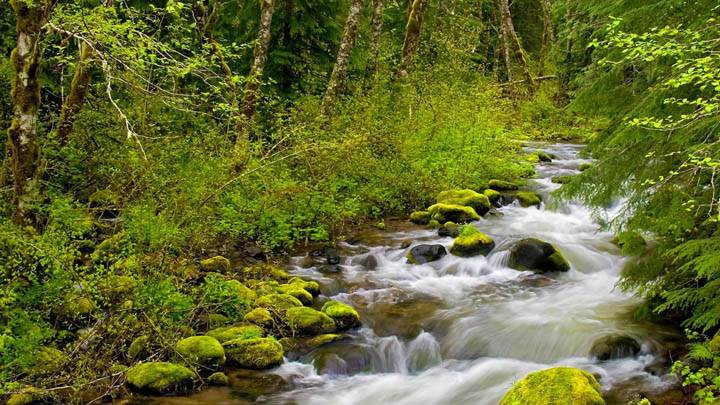 Still Creek, Mount Hood National Forest, Oregon