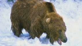 That's My Fish, Brown Bear, Alaska