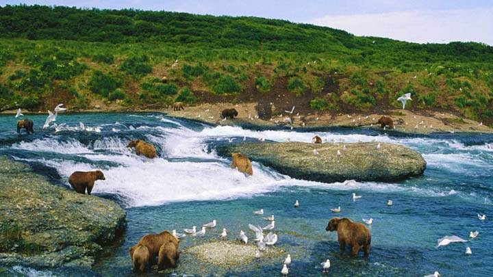 The Gathering, McNeil River, Alaska
