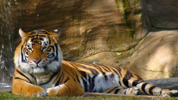 Tiger Dreamworld