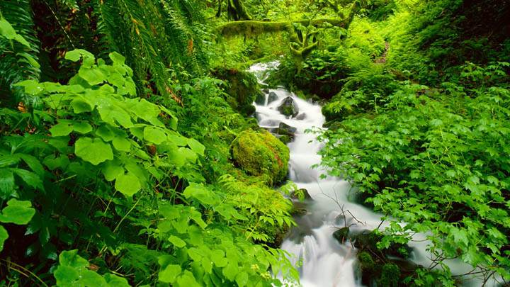 Wahkeena Creek, Columbia River Gorge, Oregon