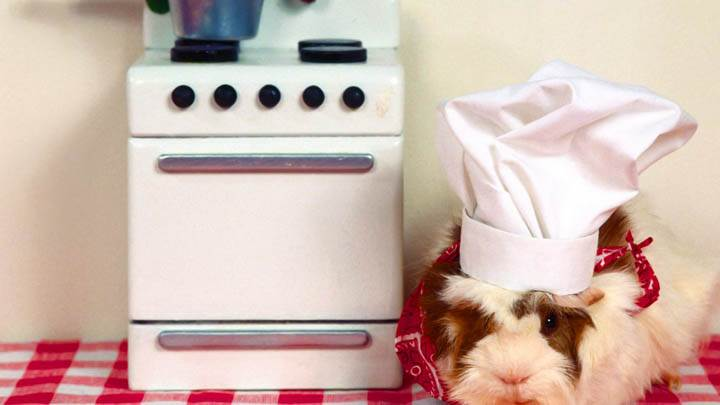What's Cooking Guinea Pig