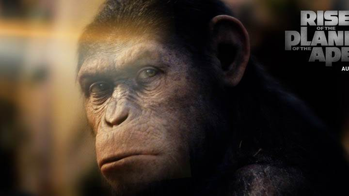 Monkey Face Closeup Rise Of The Planet Of The Apes