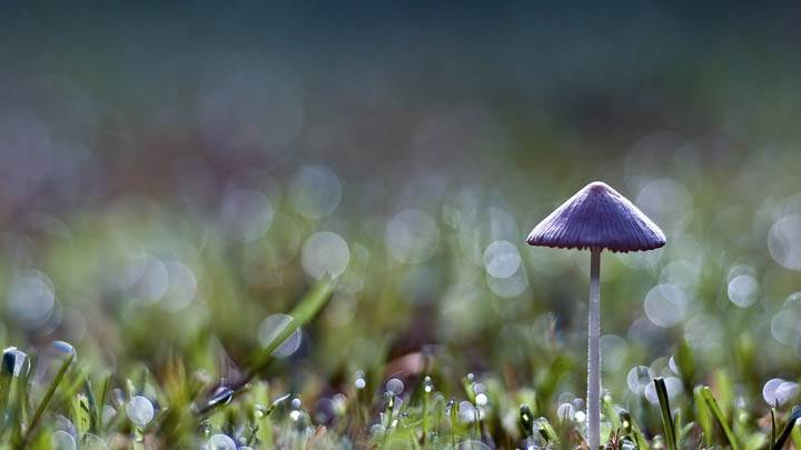 Purple Single Mashroom In Grass