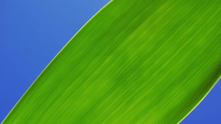 Single Grass Leave On Blue Background