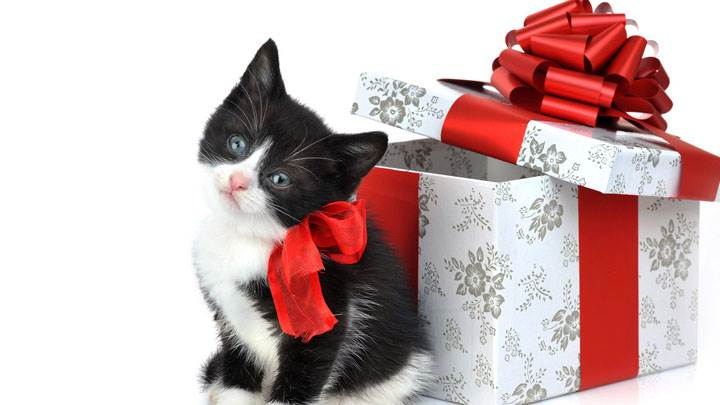 Black & White Catty With Gift Box