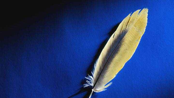 Golden Feather On Blue Background