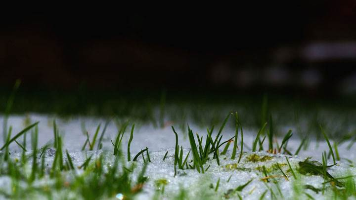 Green Grass Growing In Ice