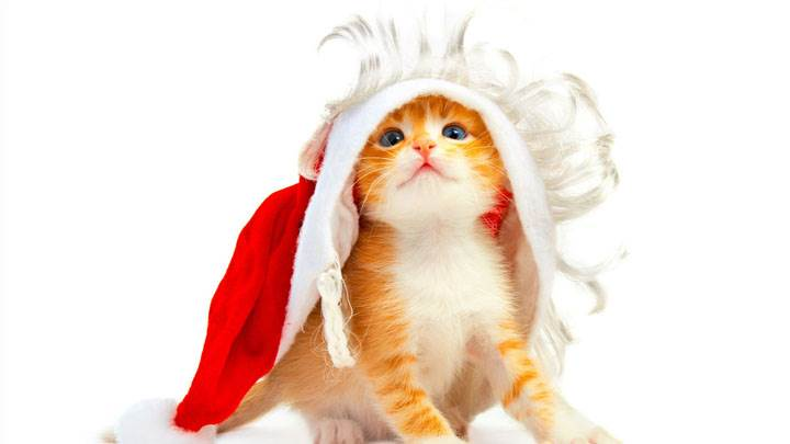 Lovely Cat Wearing Santa Cap