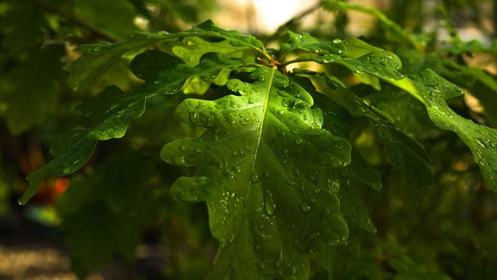 Water Drops On Leaves Closeups