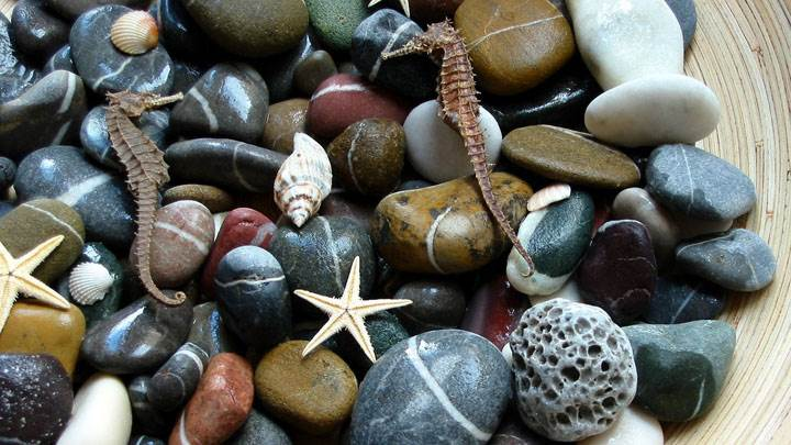 Stones And Starfish In A Bowl