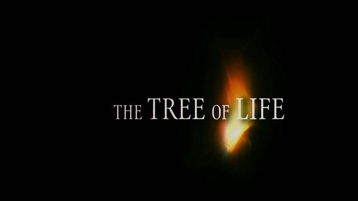 The Tree Of Life – Black Background