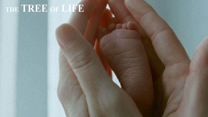 The Tree Of Life – Little Baby Foot In Hand Closeup
