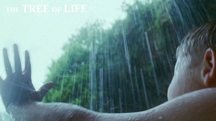 The Tree Of Life – Little Kid Enjoying Rain
