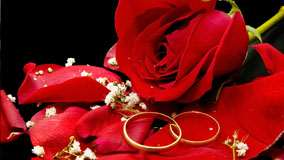 Two Wedding Golden Rings With Red Rose