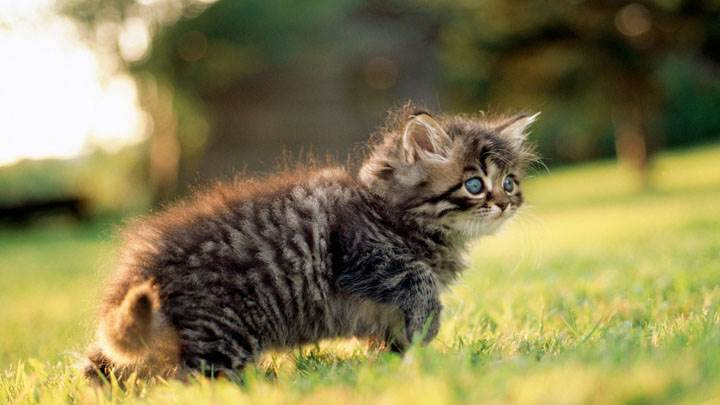 Side Pose Of Cat In Field
