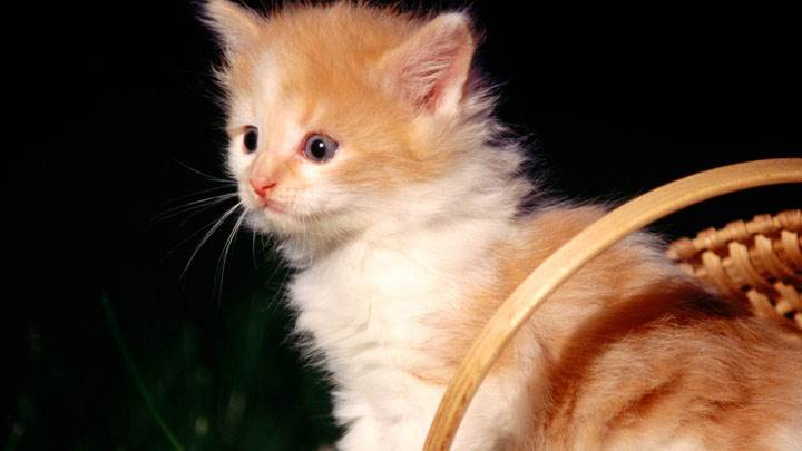 Sweet Small Cat Looking Innocent