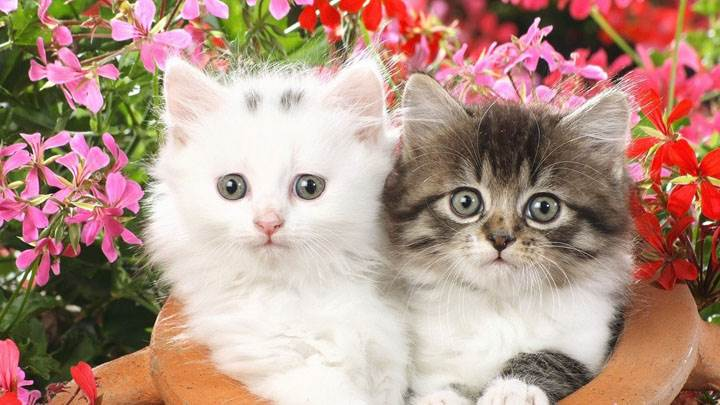 Two Sweet Catty In Garden