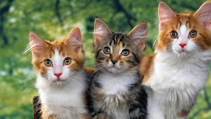 3 Sweety Cats