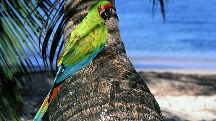 Green Parrot Sitting On A Tree Near Sea