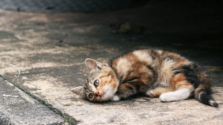 A Lonely Little Cat On Road Side