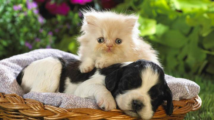 Cat With A Sleeping Dog